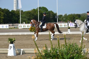 Malmö Horse Show 2014